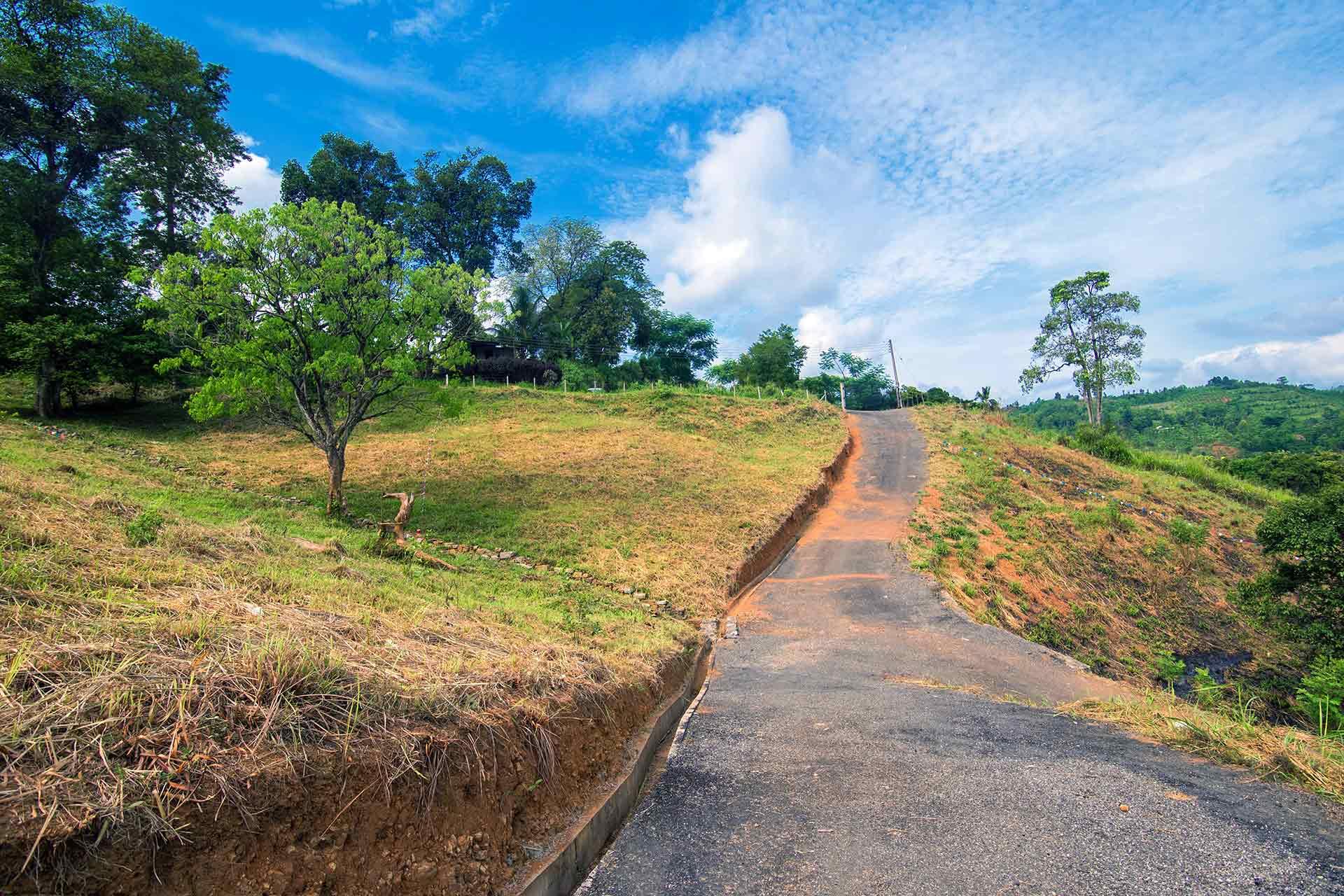 Green Tree Hill - Galaha